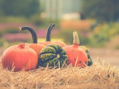 Holiday and Fall Fun for All